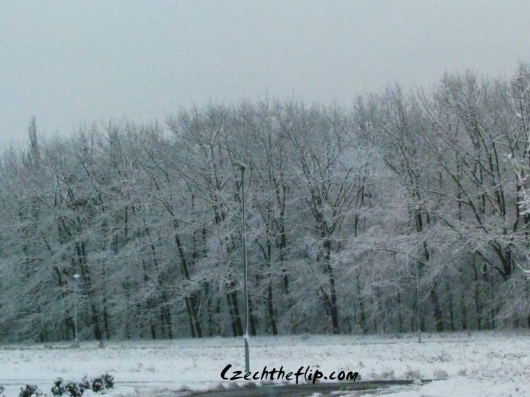 snow spring3